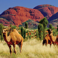 4 Day Red Centre Adventure Escorted Tour