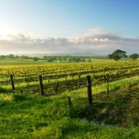 The Louise Barossa Valley