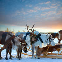 Christmas Winter in Lapland, 5 Days