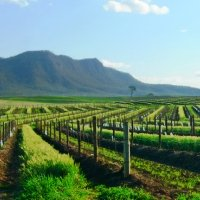 Indian Pacific - Sydney Explorer & Hunter Valley, 6 Nights, Gold Service