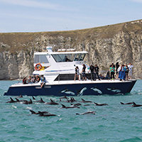 Dolphin Encounter Watch Day Tour