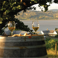 Tasmania Wine & Oyster Day Tour