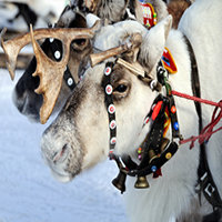 Winter in Lapland Tour, 4 Days