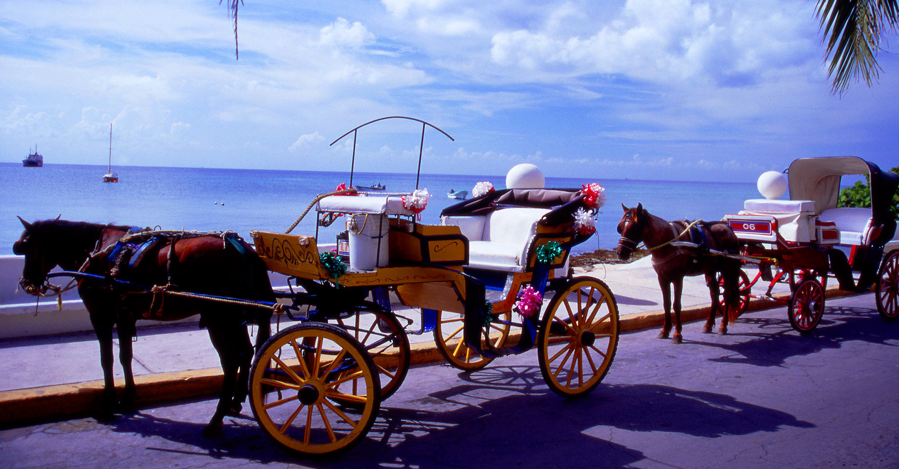 Horsedrawn Carriage Cozumel