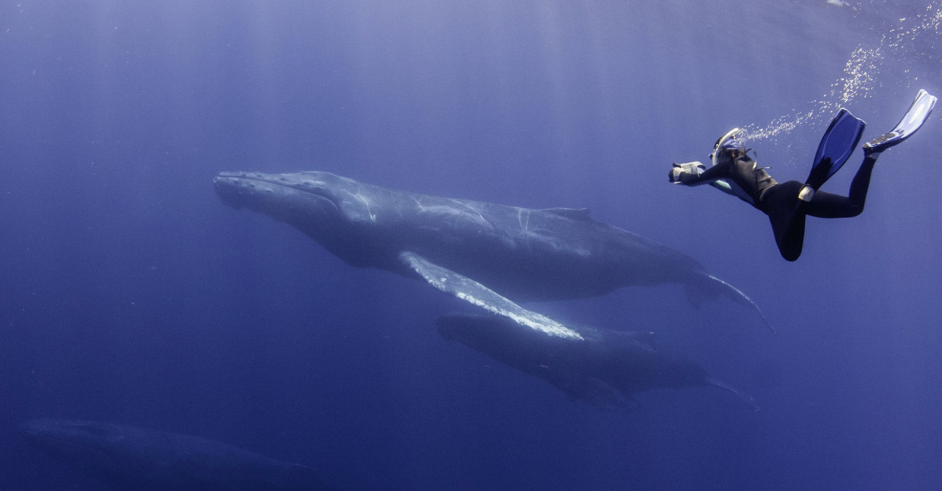 Cabo San Lucas, Diving with Whales