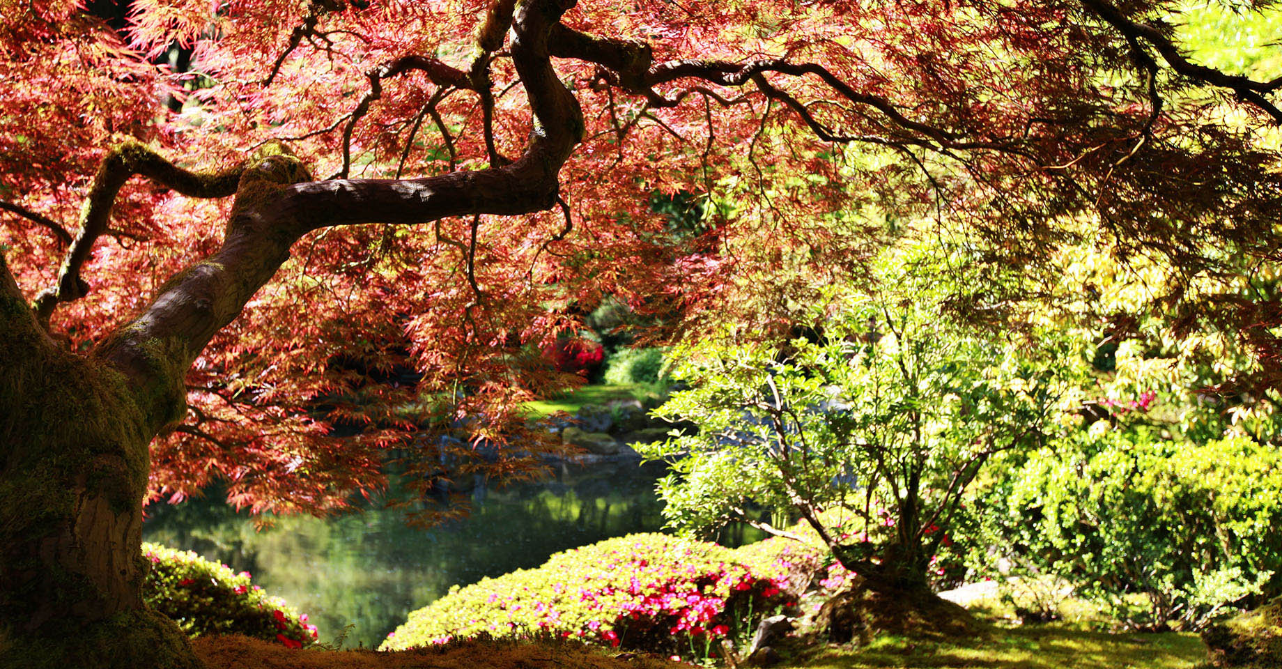 Oregon Portland Japanese Gardens Japanese Maple