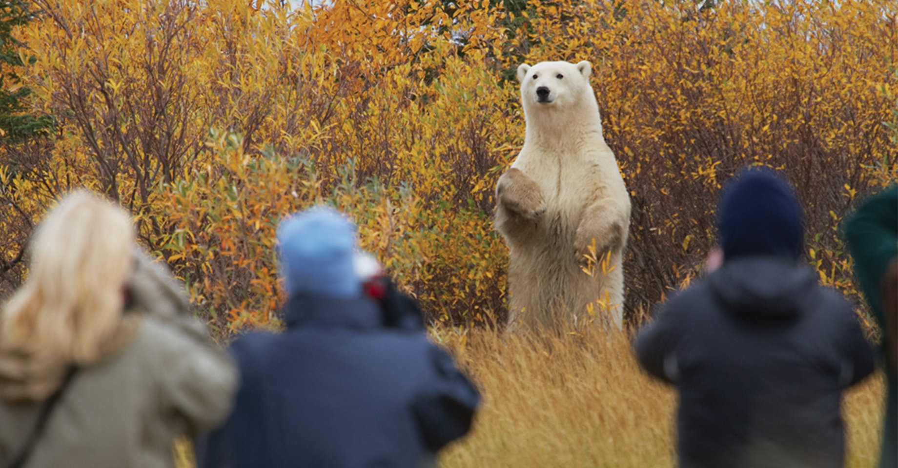 People rugged-up in winter clothes, standing and taking photographs of a polar bear standing on its rear legs, among some autumn trees
