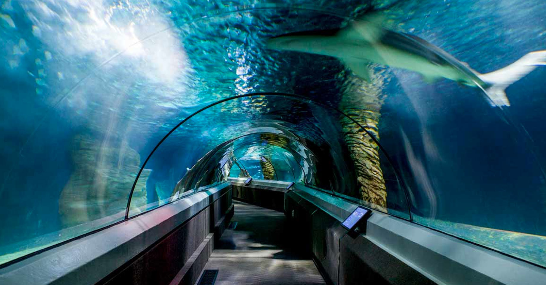 Underwater tunnel at SEA LIFE Mooloolaba