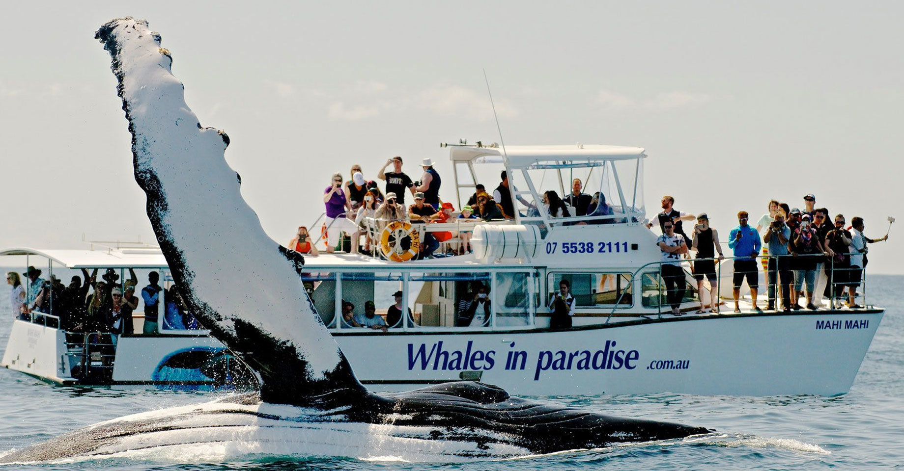 Whale-watching at the Gold Coast