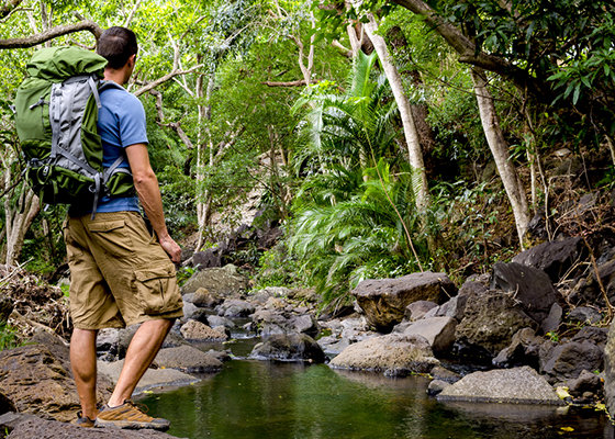 Hiking in Hawaiian rainforests