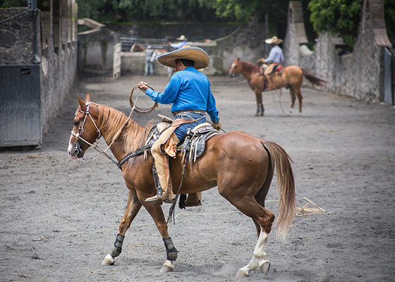 Mexico Traditional Rodeo Show